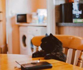 close-up photo of black cat Stock Photo