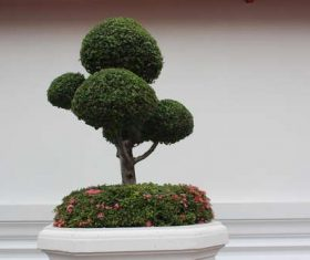 Beautiful decorative bonsai Stock Photo 01