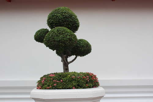 Beautiful decorative bonsai Stock Photo 01