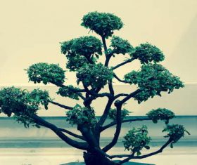 Beautiful decorative bonsai Stock Photo 02
