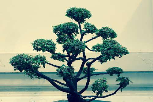 Beautiful decorative bonsai Stock Photo 02