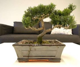 Beautiful decorative bonsai Stock Photo 04