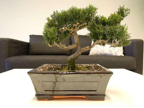 Beautiful decorative bonsai Stock Photo 04