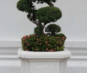 Beautiful decorative bonsai Stock Photo 05