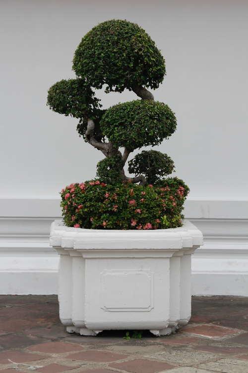 Beautiful decorative bonsai Stock Photo 05