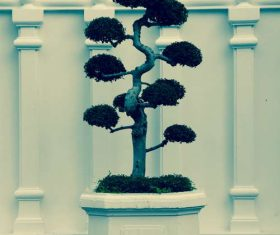 Beautiful decorative bonsai Stock Photo 06