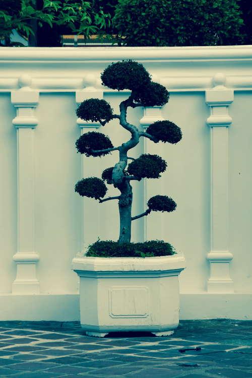 Beautiful decorative bonsai Stock Photo 06