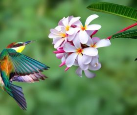 Beautiful kingfisher and white flowers Stock Photo