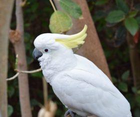 Beautiful white parrot Stock Photo
