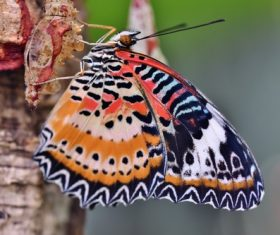 Big butterfly on tree trunk Stock Photo
