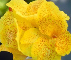 Closeup summer yellow flower Stock Photo
