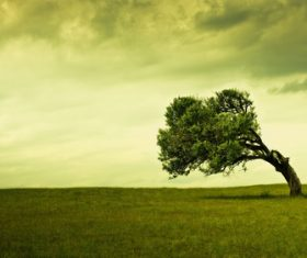 Curved tree on the plain Stock Photo