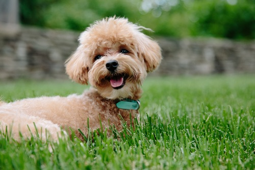 Cute dog on the grass Stock Photo