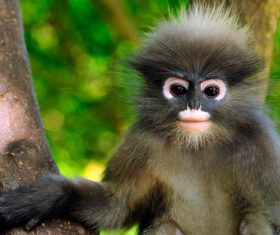Cute monkey closeup on tree Stock Photo
