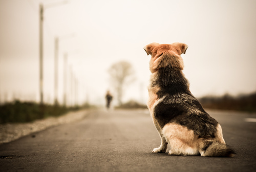 Dog sitting on the road waiting for the owner to come back Stock Photo