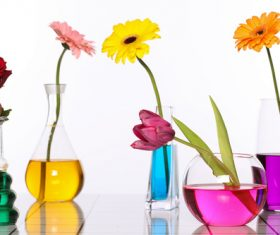 Flowers in glasses of coloured water Stock Photo 01