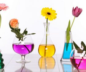 Flowers in glasses of coloured water Stock Photo 02