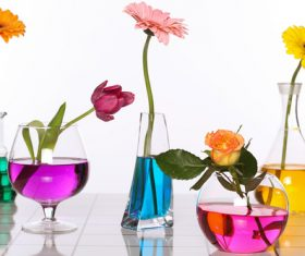 Flowers in glasses of coloured water Stock Photo 03