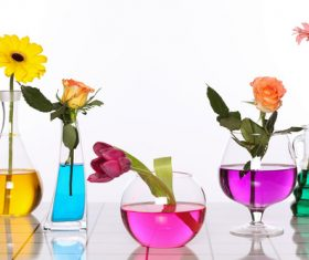 Flowers in glasses of coloured water Stock Photo 04