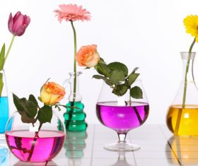 Flowers in glasses of coloured water Stock Photo 05