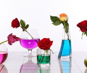 Flowers in glasses of coloured water Stock Photo 06