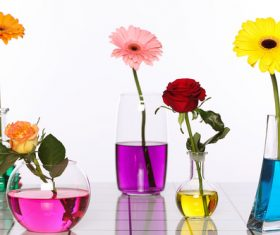 Flowers in glasses of coloured water Stock Photo 07