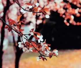Flowers on twigs Stock Photo 02