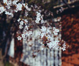 Flowers on twigs Stock Photo 03