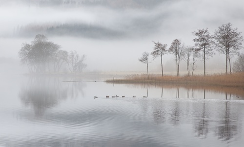 Fog tree natural scenery of ducks in the river Stock Photo