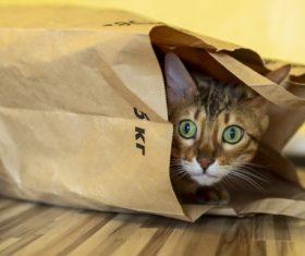Frightened kitten hides Stock Photo