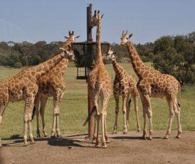 Giraffe in the reserve Stock Photo