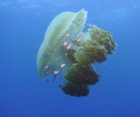 Jellyfish in the ocean Stock Photo 01