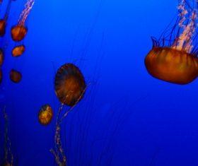 Jellyfish in the ocean Stock Photo 03
