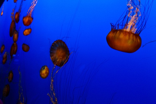 Jellyfish in the ocean Stock Photo 03