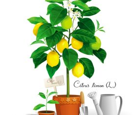 Lemon tree vector illustration