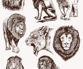 Lion skecth design vectors 02