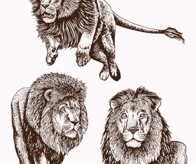 Lion skecth design vectors 03