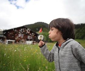 Little boy blowing dandelion flower Stock Photo