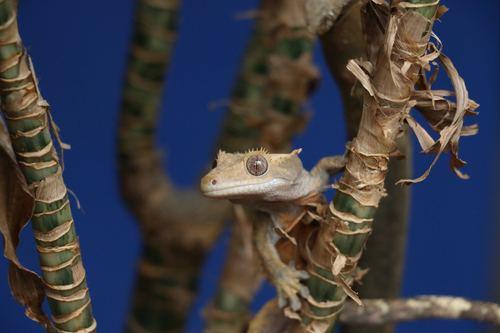 Lizard on a branch Stock Photo