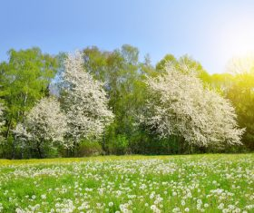 Lush woods and dandelions natural scenery Stock Photo