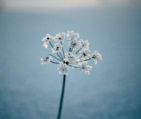 Macro Photograph Flowers Stock Photo