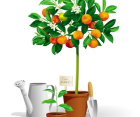 Mandarin tree vector illustration