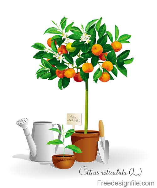 Mandarin tree vector illustration