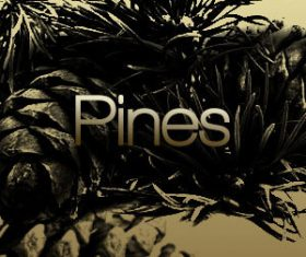 Pine Trees HD Photoshop Brushes
