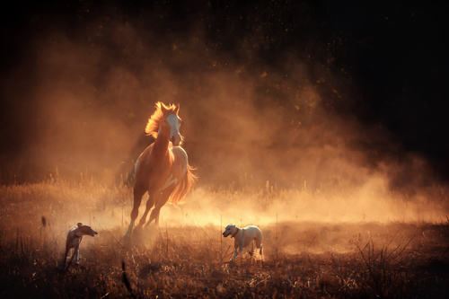 Running Horse and Two Dogs Stock Photo