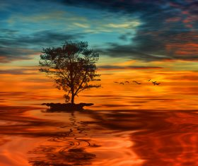 Solitary tree and sunset beautiful scenery Stock Photo