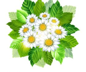 Spring white flower with green leaves vector