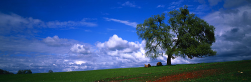 Trees sky field clouds nature landscape Stock Photo