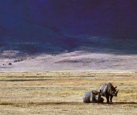 Two rhinos on the prairie Stock Photo