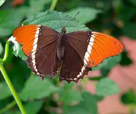 Two-tone butterfly Stock Photo